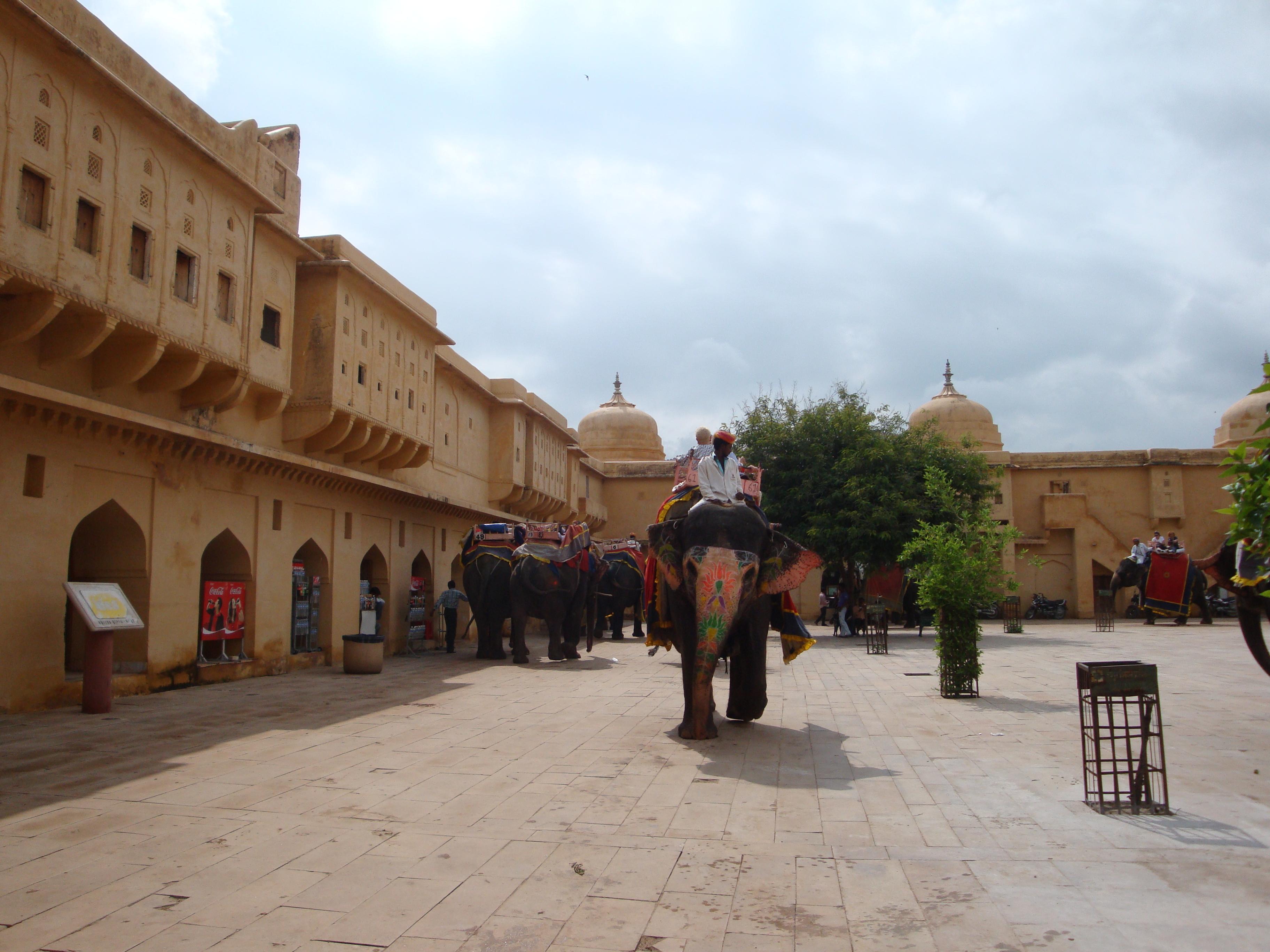 Elefante en Amer Jaipur