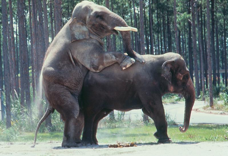 Elefantes en periyar